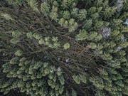 Blick von einer Drohne in den zerstörten Wald. (Bild: Pius Amrein (Lieli, 8. Januar 2018))