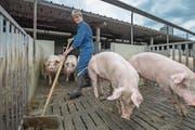 Schweinebäuerin Brigitte Käslin beim Ausmisten des Stalls. Dieser gilt gemäss Branchenverband als mustergültig. (Bild: Pius Amrein (Nottwil, 9. August 2017))
