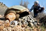 Ein UNO-Experte inspiziert in der Nähe der libanesischen Stadt Ouazaiyeh eine Streubombe, die von Israel im Krieg gegen die Hisbollah abgeworfen worden war. (Bild: Keystone/Mohammed Zaatari)