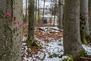 Die zu fällenden Bäume sind schon mit Farbe markiert. (Bild: Boris Bürgisser (Luzern, 20. März 2018))