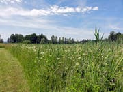 Die Naturschutzzone im Nuoler Ried soll vergrössert werden. (Bild: zvg)