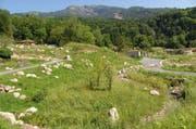 Der Natur- und Tierpark Goldau wurde als vorbildliches Areal ausgezeichnet. Ein Teil davon ist die 2009 eröffnete Gemeinschaftsanlage für Bär und Wolf. Diese bietet den beiden Beutegreifern viel Platz und schafft mit dem angrenzenden Schuttbach einen wichtigen Lebensraum für verschiedene Tier- und Pflanzenarten. (Bild: PD)