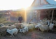 Betrieb mit 100 Schafen: Kleinbauer Tristan Banea auf seinem Hof. (Bild: Mihai Stoica (Vurpar, 10. März 2018))