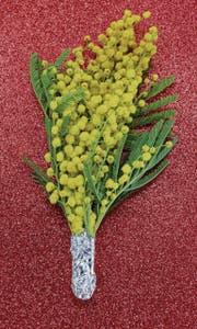 Die Frauen werden am internationalen Tag der Frau mit gelben Mimosen beschenkt. (Bild: PD)