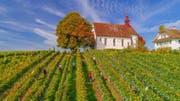 Die tolle Witterung, die gute Qualität und die besten Bedingungen bei der Lese bleiben im Weinjahr 2017 in positiver Erinnerung. (Bild: PD (Sursee, 29. September 2017))