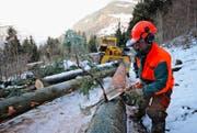 Forstwarte bei der Arbeit im Wald: Die Urner Forstreviere sollen grösser werden. (Archivbild Neue UZ)