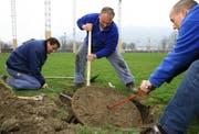 Die Arbeiter Miroslav Bekic, Ueli Frei und Gregor Jurt (von links) versuchen mit aller Kraft, den Zisternendeckel zu entfernen. (Bild Chris Iseli/Neue LZ)