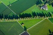 Zur Pflege der Landschaft gehört auch das Anlegen unterschiedlicher Ackerkulturen. (Bild: Keystone/Martin Rütschi)