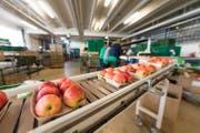 Werden künftig vermehrt im Ausland eingekauft: Äpfel der Firma Fenaco in Sursee. (Bild: Roger Grütter (6. Oktober 2017, Sursee))
