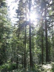 Vielseitiger Zuger Wald auf dem Gottschalkenberg. (Bild: PD)