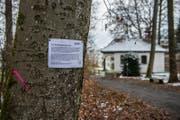 Reizthema Baumfällungen: Das Stadtforstamt Luzern informiert über die Aktion mit Anschlägen. (Bild: Boris Bürgisser (Luzern, 20. März 2018))