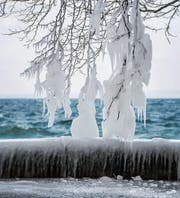 Beinahe unsichtbar hocken die Insekten gefroren in Baumritzen. (Bild: Urs Bucher (Rorschach, 26. Februar 2018))