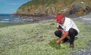 Umweltschützer André Ollivro bei der Pointe des Guettes. (Bild: Stefan Brändle (Hillion, 9. Juli 2017))
