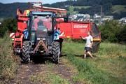 Oben: Bauer Markus Schmid sortiert mit Helferin Cornelia Banz die Kartoffeln. Unten: Der Landwirt füllt die Kartoffeln auf seinem Hof in Kottwil in grosse Holzkisten und gibt Anweisungen. (Bilder Nadia Schärli)