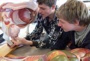 Daniel Moos (rechts) und Samuel Trösch untersuchen im Unterricht am Modell Verdauung und Euteranlage der Kuh. (Bild Bea Zai/Neue OZ)