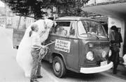 Oben: Dompteurin Maxy Niedermayer führt Eisbär «Baby» durch Rothenburg spazieren, vorsichtig gefolgt von drei neugierigen Knaben. Unten: Im Dorfzentrum gibt es für die Eisbärdame einiges zu entdecken – zum Beispiel einen Lieferwagen.Archivbilder: Emanuel Ammon (5. August 1976)
