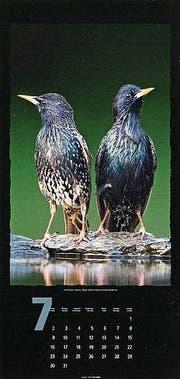 Vögel. (Bild: Weingarten)