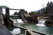 Das Stauwehr des Kraftwerks Sarneraa in Kägiswil: In der Mitte der Schütz, der Restwasser durchlässt, und rechts die erstellte Fischtreppe. (Symbolbild Romano Cuonz / Neue OZ)
