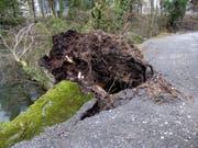 Sturmtief Burglind fegte mit Böen mit bis zu 226 Kilometern pro Stunde durch den Park. (Bild: Natur- und Tierpark Goldau)