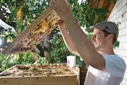 Ist mit der Ernte zufrieden: Lukas Erni vom Verband Luzerner Imkervereine bei seinen Bienen in Ruswil. (Bild: Eveline Beerkircher (30. Juni 2017))