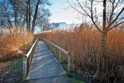 Das am Vierwaldstättersee gelegene Horwer Naturschutzgebiet Steinibachried. Dessen Betreuung ist eine der Aufgaben der Umweltschutzstelle. (Bild Boris Bürgisser)
