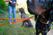 Der Kantonsrat setzt auf Eigenverantwortung und will die Hundehalter an der langen Leine lassen. (Bild: Keystone / Michael Rüetschi)