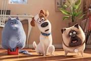 Der treuherzig dreinblickende Terrier Max (Bild Mitte) ist der Star des Zeichentrickfilms «Pets», welcher derzeit die Schweizer Kinocharts anführt. (Bild: Keystone)