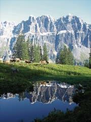 Auch bei einem auf der Alp Fiseten gesömmerten Tier wurde ein positiver BVD-Befund festgestellt. (Archivbild Urner Zeitung)