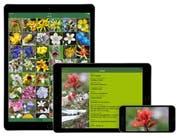 Rund 150 Blumenarten können mit der App «Rockies AlpineFlower Finder» bestimmt werden. (Bild: PD)