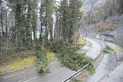 Bei der Einfahrt von der Axenstrasse Richtung Flüelen stürzten Bäume auf die Strasse. (Bild: Urs Hanhart)