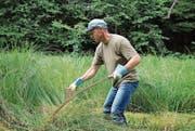 Ein Helfer bei der anstrengenden Arbeit mit der Sense im Feuchtgebiet des Töniweihers in Sins. (Bild: PD)