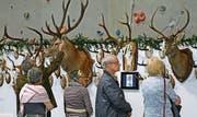 Die Besucher inspizieren die ausgestellten Trophäen. (Bild: Beat Christen (Engelberg, 8. April 2017))