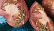 Zum Anbeissen schön, aber lieber nicht reinbeissen? Solche Tomaten fand unsere Leserin aus Ebikon letztes Jahr.Leserbild (Bild: : Bigi Lindegger)