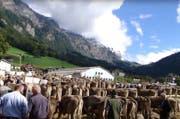 Die Viehpräsentation vor perfekter Kulisse. (Bild: Youtube/1940sand)