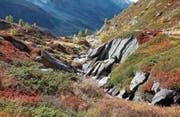 Im Reich der Schafe: Teppiche aus Moos, Kräutern, Wacholder und Beeren zuhinterst im Lötschental. (Bild: I)