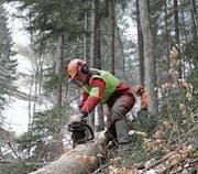 Die Situation der Urner Forstbetriebe ist angespannt. (Bild: Florian Arnold (Bürglen, 12. April 2011))