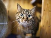 Busse für den Katzenquäler aus Sachseln (Symbolbild). (Bild: Keystone)