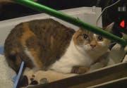 Die Katze sorgt für Aufregung. (Bild: Screenshot SRF)