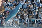 Delfin fängt einen Ball während einer Show in einem französischen Meerespark. (Bild: Loic Venance/AFP (Port-Saint Père, 14. Oktober 2017))