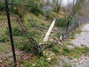 Bäume sind an mehreren Stellen auf den Aussenzaun des Tierparks gestürzt. (Bild: Natur- und Tierpark Goldau)