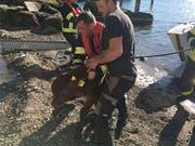 Zwei Tiere wurden durch die Feuerwehr aus dem Wasser geholt. (Bild: Feuerwehr Küssnacht)