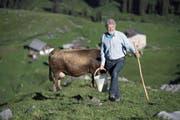 Er spricht auch mit «seinen» Kühen. Das sei gut fürs Zutrauen der Tiere, sagt Älpler Wendelin Waser. Hier auf Fulenwasen bringt er ihnen Salz. Unten links sieht man ihn beim Betruf. (Bilder Corinne Glanzmann)