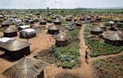 Szene aus dem Flüchtlingslager Bidi Bidi im Norden Ugandas, in welchem viele Personen aus dem Südsudan untergebracht sind. (Bild: Ben Curtis/AP (9. Juni 2017))