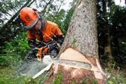 Rund 30 000 Kubikmeter Sägerundholz werden pro Jahr im Kanton produziert. (Archivbild Stefan Kaiser)