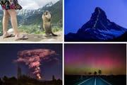 Ein Murmeli, eine Lichtshow am Matterhorn, Nordlichter und ein Vulkan: Spektakuläre Bilder 2015. (Bilder Keystone)