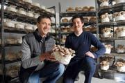Sepp Häcki und Sohn Patrick zeigen einer der Substratblöcke, auf denen die Pilze heranwachsen. (Bild Corinne Glanzmann)