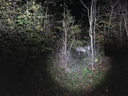 Der Wolf M74, hier gesichtet Mitte Oktober im Kernwald. (Bild: PD/Kapo NW)