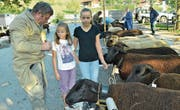 Junge Besucher begutachten einige der 179 aufgeführten Schafe. (Bild: Paul Küchler (Sarnen, 23. September 2017))