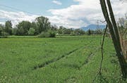 Im Fokus des neuen Regionalen Raumkonzepts steht auch die Natur: Das Bild zeigt den Blick auf die Ebene bei Reussegg, die als Auenlandschaft renaturiert wird. (Bild: Heinz Abegglen (Sins, 13. Mai 2017))