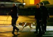 Ein Polizeihund auf Spurensuche. (Bild: Geri Holdener, Bote der Urschweiz)